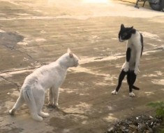 Cat-weird-fight