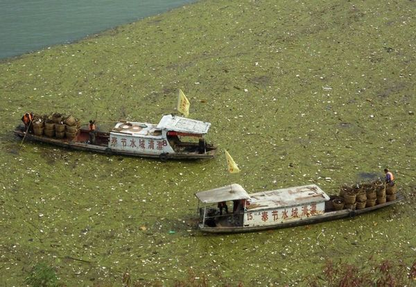 The Yangtze River is literally covered in trash.
