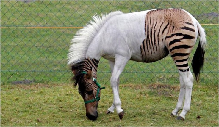incredible and real animal hybrids poplyft