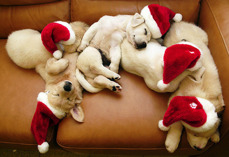 Image result for christmas pets sleeping
