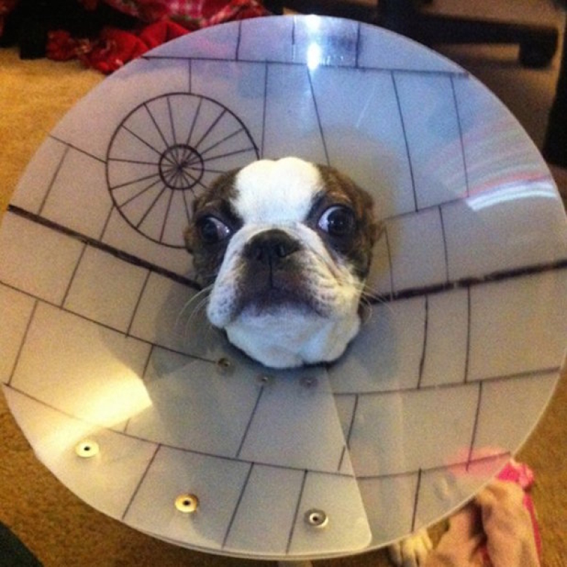 dog cone death star