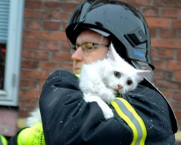 8  firefighters_rescuing_animals_photos_7