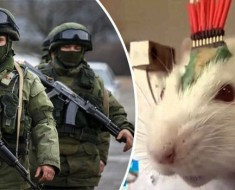Russian President Release Engineered Army of Rats in Fight Against ISIS