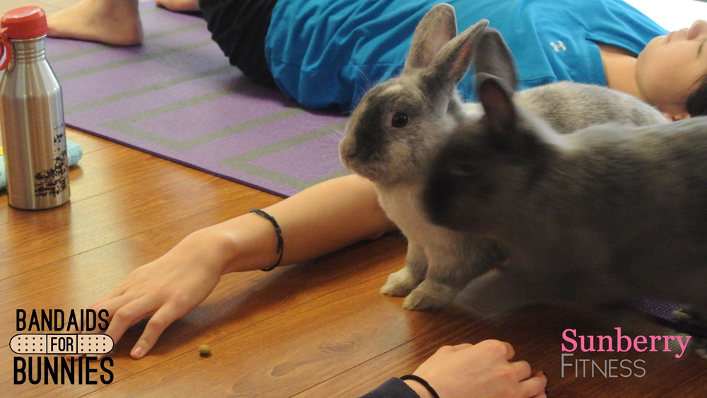 Bunnies make everything better. Even Yoga!