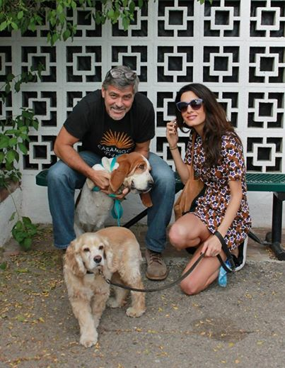 George Clooney Says Adopt, Don't Shop