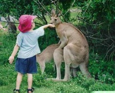 Awkward-Funny-Family-Vacation-Photos-humping-kangaroos